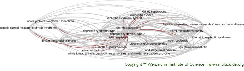 Diseases related to Nephrotic Syndrome, Type 2