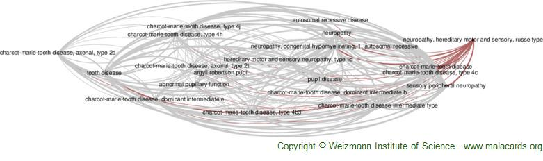 Diseases related to Neuropathy, Hereditary Motor and Sensory, Russe Type