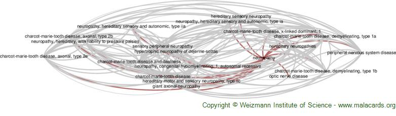Diseases related to Neuropathy