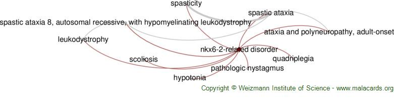 Diseases related to Nkx6-2-Related Disorder