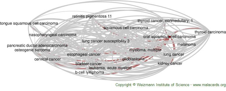 Diseases related to Oral Squamous Cell Carcinoma