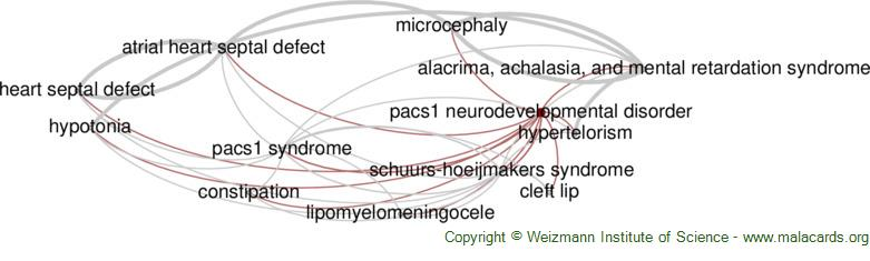 Diseases related to Pacs1 Neurodevelopmental Disorder