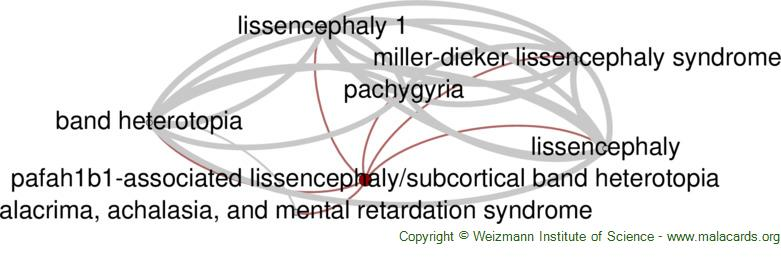 Diseases related to Pafah1b1-Associated Lissencephaly/subcortical Band Heterotopia
