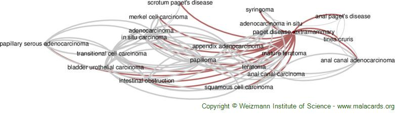 Diseases related to Paget Disease, Extramammary