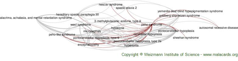 Diseases related to Peho Syndrome