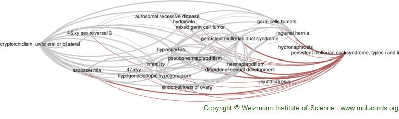 Diseases related to Persistent Mullerian Duct Syndrome, Types I and Ii