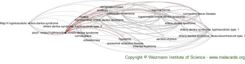 Diseases related to Plod1-Related Kyphoscoliotic Ehlers-Danlos Syndrome