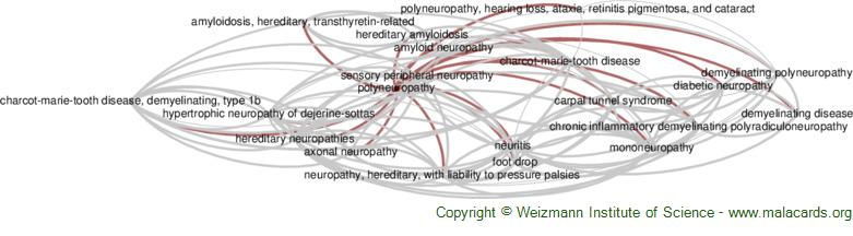Diseases related to Polyneuropathy