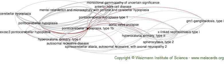 Diseases related to Pontocerebellar Hypoplasia, Type 1b