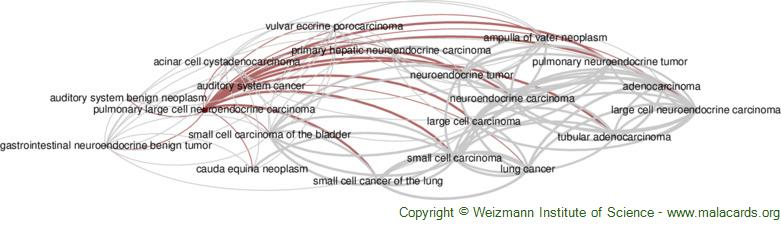 Diseases related to Pulmonary Large Cell Neuroendocrine Carcinoma