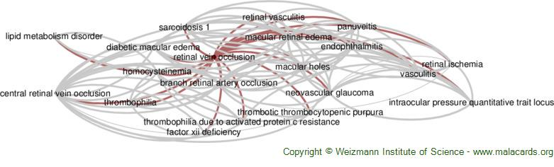 Diseases related to Retinal Vein Occlusion