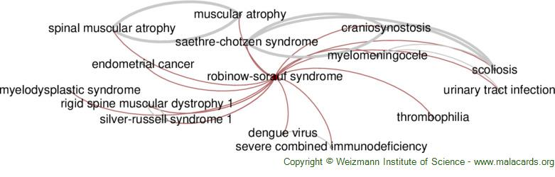 Diseases related to Robinow-Sorauf Syndrome