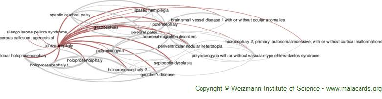 Diseases related to Schizencephaly