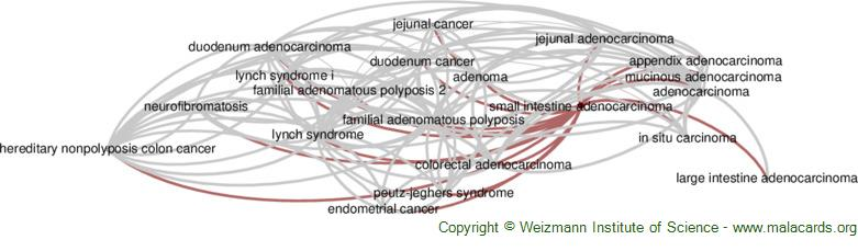 Diseases related to Small Intestine Adenocarcinoma