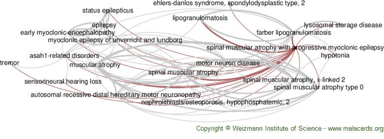 Diseases related to Spinal Muscular Atrophy with Progressive Myoclonic Epilepsy