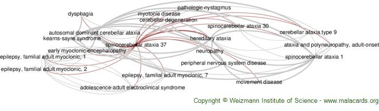 Diseases related to Spinocerebellar Ataxia 37