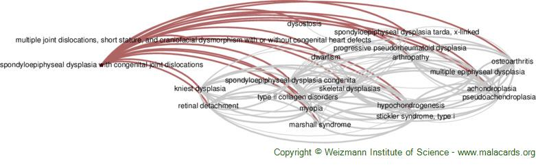 Diseases related to Spondyloepiphyseal Dysplasia with Congenital Joint Dislocations