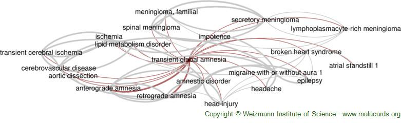 Diseases related to Transient Global Amnesia