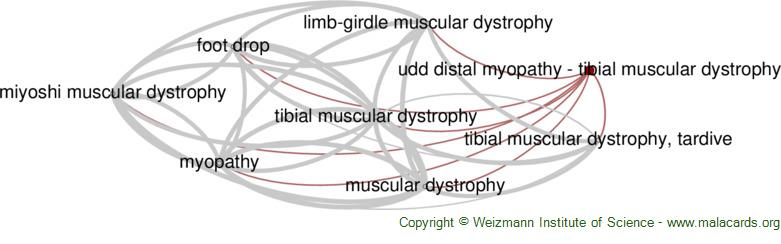 Diseases related to Udd Distal Myopathy - Tibial Muscular Dystrophy