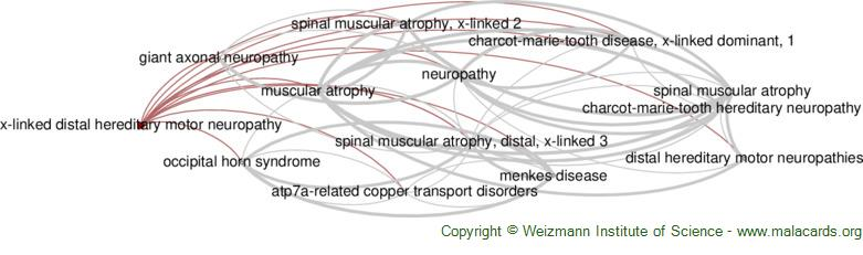Diseases related to X-Linked Distal Hereditary Motor Neuropathy