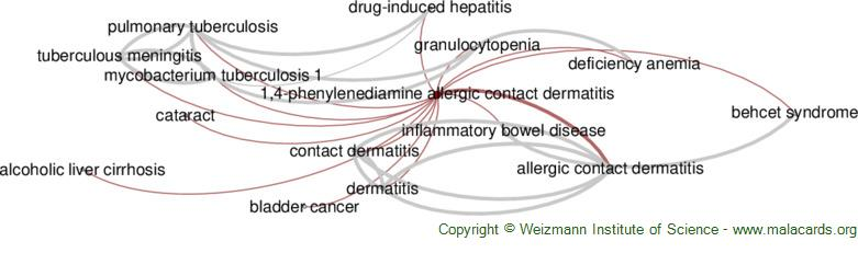 Diseases related to 1,4-Phenylenediamine Allergic Contact Dermatitis