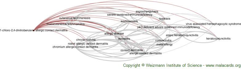 Diseases related to 1-Chloro-2,4-Dinitrobenzene Allergic Contact Dermatitis