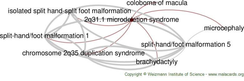 Diseases related to 2q31.1 Microdeletion Syndrome