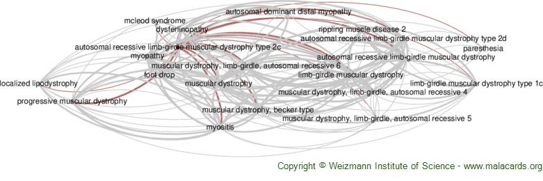 Diseases related to Autosomal Recessive Limb-Girdle Muscular Dystrophy Type 2c