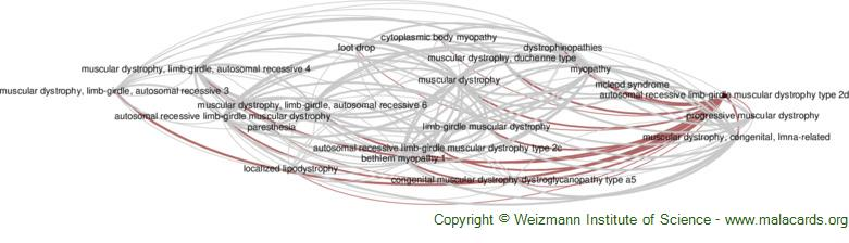 Diseases related to Autosomal Recessive Limb-Girdle Muscular Dystrophy Type 2d