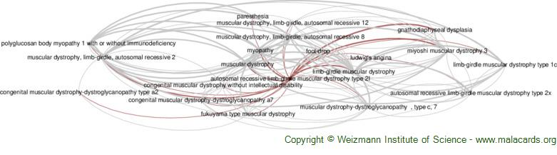 Diseases related to Autosomal Recessive Limb-Girdle Muscular Dystrophy Type 2l