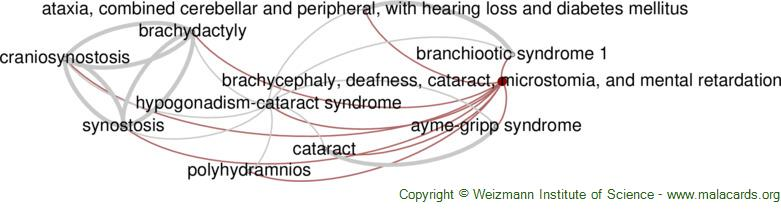 Diseases related to Brachycephaly, Deafness, Cataract, Microstomia, and Mental Retardation