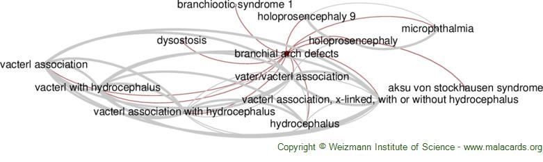 Diseases related to Branchial Arch Defects