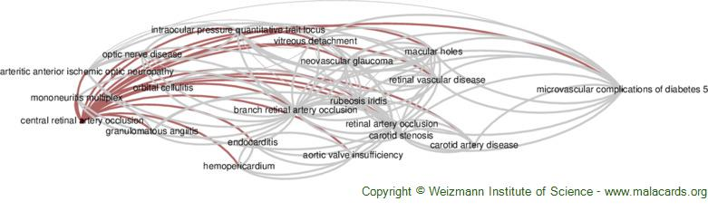 Diseases related to Central Retinal Artery Occlusion