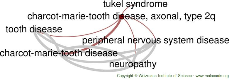 Diseases related to Charcot-Marie-Tooth Disease, Axonal, Type 2q