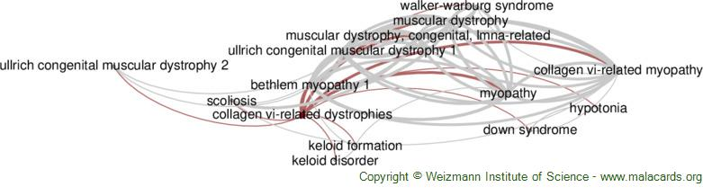 Diseases related to Collagen Vi-Related Dystrophies
