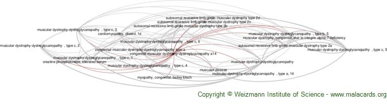 Diseases related to Congenital Muscular Dystrophy-Dystroglycanopathy A14