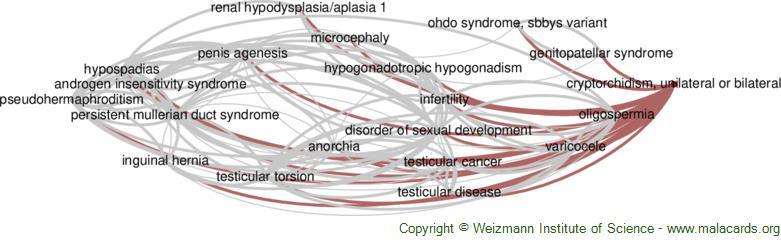 Diseases related to Cryptorchidism, Unilateral or Bilateral