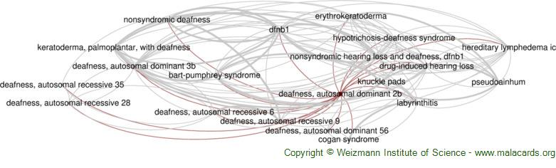Diseases related to Deafness, Autosomal Dominant 2b