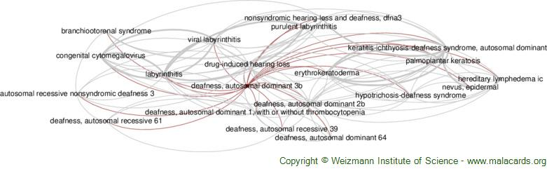 Diseases related to Deafness, Autosomal Dominant 3b