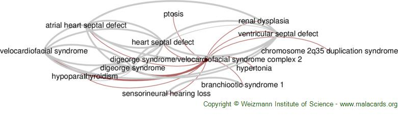 Diseases related to Digeorge Syndrome/velocardiofacial Syndrome Complex 2