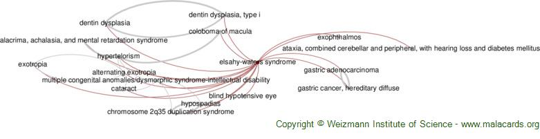 Diseases related to Elsahy-Waters Syndrome