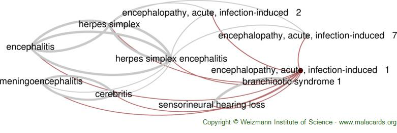 Diseases related to Encephalopathy, Acute, Infection-Induced   1