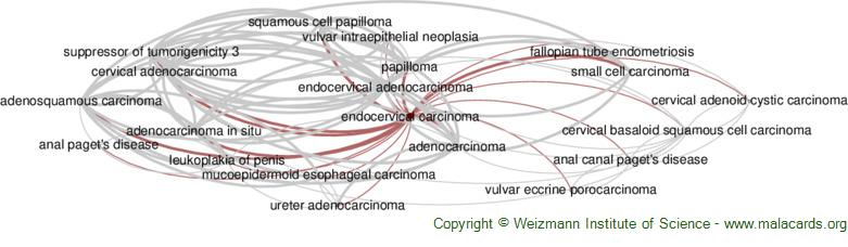 Diseases related to Endocervical Carcinoma