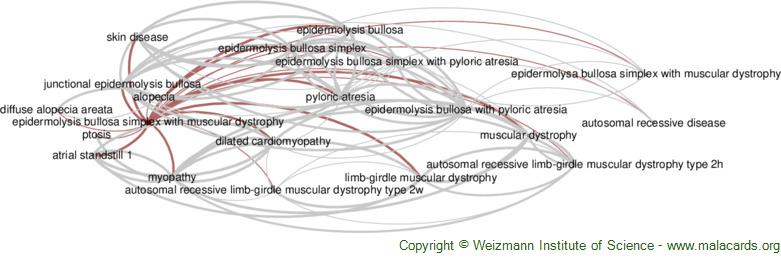 Diseases related to Epidermolysis Bullosa Simplex with Muscular Dystrophy