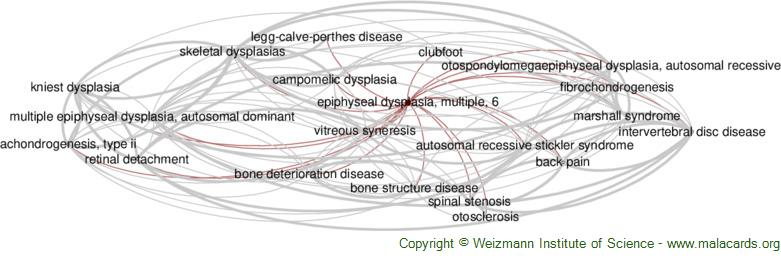 Diseases related to Epiphyseal Dysplasia, Multiple, 6