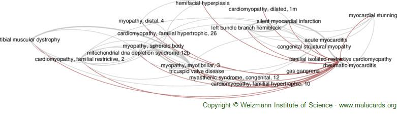 Diseases related to Familial Isolated Restrictive Cardiomyopathy