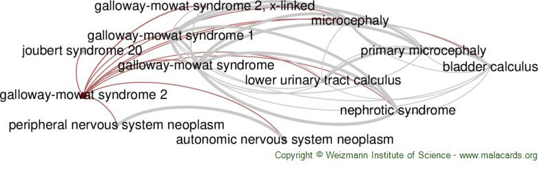 Diseases related to Galloway-Mowat Syndrome 2