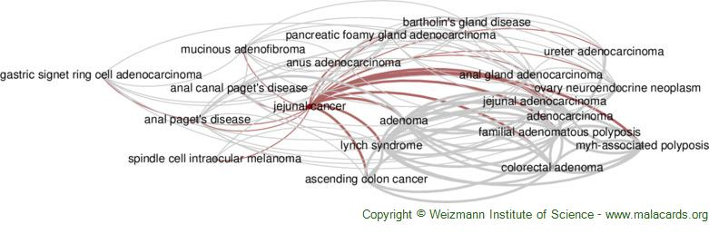 Diseases related to Jejunal Cancer