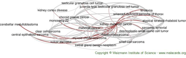 Diseases related to Kidney Rhabdoid Cancer