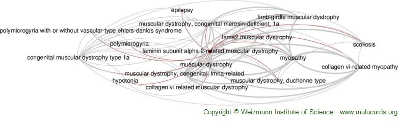 Diseases related to Laminin Subunit Alpha 2-Related Muscular Dystrophy